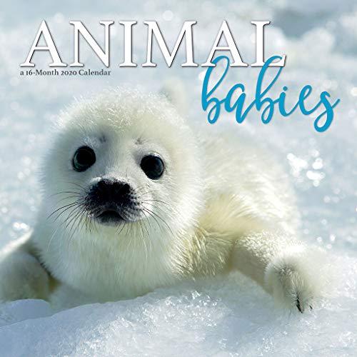 Best Animal Calendars