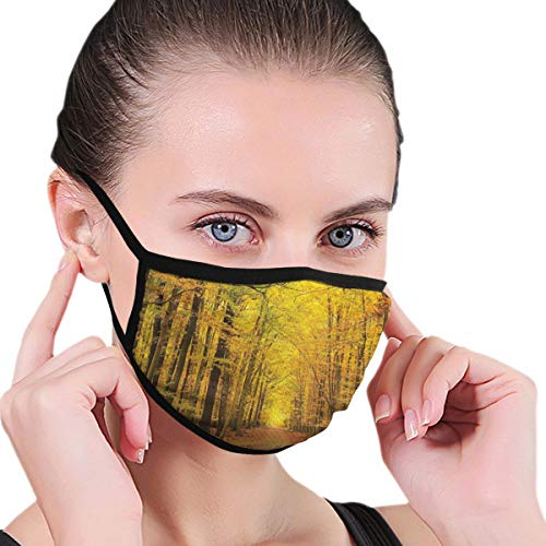Comfortable Windproof mask,Seasonal Park Foliage Pathway Scenic Environment Leaves And Branches Adults