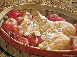 Cobble Hill Apples and Oranges 500 Piece Jigsaw Puzzle