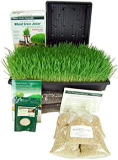 Best grow your own barley grass Reviews