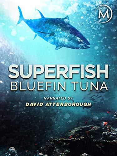 Superfish: Bluefin Tuna - Narrated …