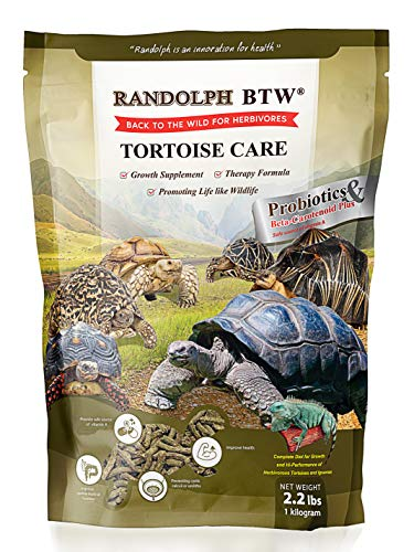 Turtle Food and Care