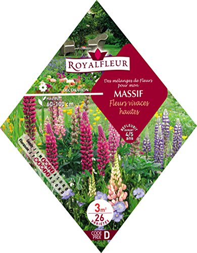 Royalfleur PFRK08364 Graines de Mélange de Fleurs mon Massif Fleurs Vivace Hautes 3 m²