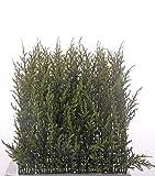 artplants.de Seto de ciprés Falso Neoh para Exterior, Verde, 25x25cm - Arbusto de ciprés Artificial - Ciprés sintético