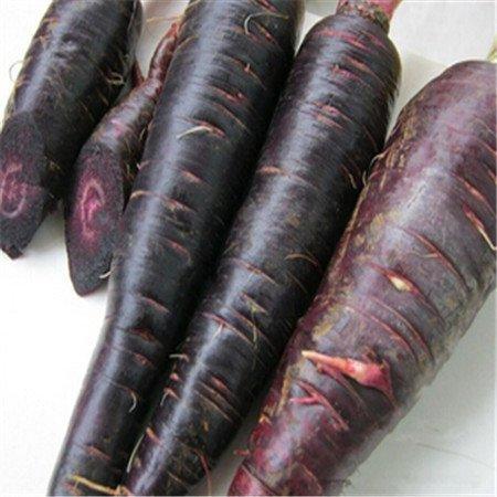 New Radis Rare - Crimson géant - Heirloom - 100 graines végétales