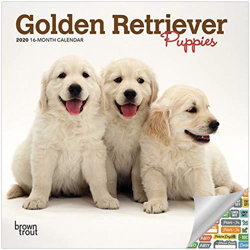 Golden Retriever Welpen Kalender 2020 Set – Deluxe 2020 Golden Retriever Welpen Mini Kalender mit über 100 Kalenderaufklebern (Geschenk für Hundeliebhaber, Bürobedarf)