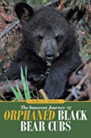 The Innocent Journey of Orphaned Black Bear Cubs