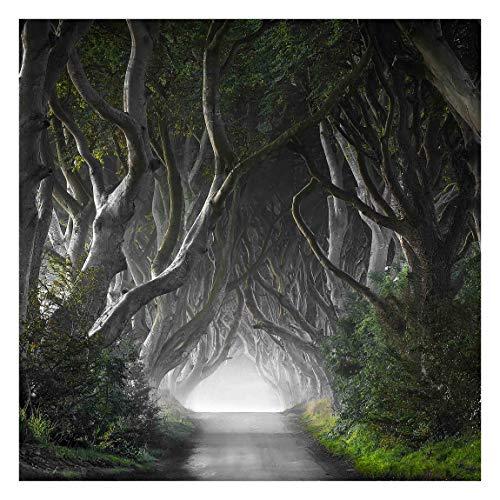 Bilderwelten Fotomural - Bosque en Irlanda del Norte - Mural cuadrado papel pintado fotomurales murales pared papel para pared foto 3D mural pared barato decorativo, Tamaño: 192cm x 192cm