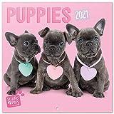 ERIK - Calendario de pared 2021 Studio Pets Puppies, 30x30 cm