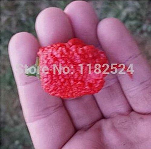 200 graines ? du monde Hottest Carolina Reaper Piment Capsicum Graines de légumes