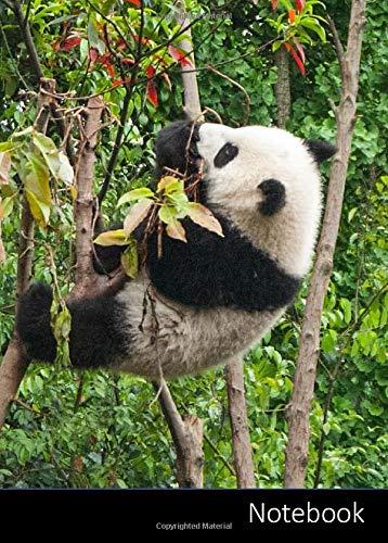 Notebook: Kleines Panda Notizbuch A6, liniert. Nachhaltig und klimaneutral.
