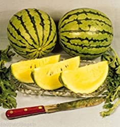 Yellow Doll Watermelons