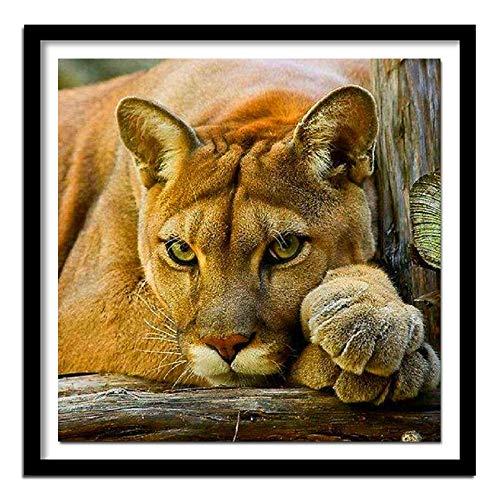 ZXXGA DIY 5D Kit de Pintura de Diamantes león Gato Animal Adulto DIY Pintura de Diamantes Punto de Cruz decoración de la Pared del hogar Trabajo de Arte Diamante Redondo 50x50cm