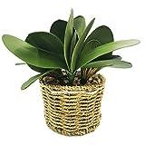 DUGYIRS Artificial Planta Maceta Phalaenopsis Verde Maceta Planta Estilo Rural Hecha Mano Pura Maceta Hojas Verdes Phalaenopsis para Decoración Oficina Casa