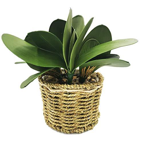 DUGYIRS Pianta Vaso Artificiale Phalaenopsis Verde Pianta Vaso Puro Vaso da Fiori in Stile Rurale Fatto Mano Foglie Verdi Phalaenopsis per Verde Decorazione