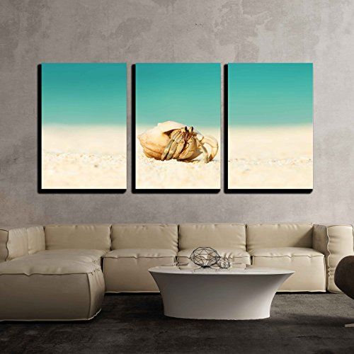 """wall26 - 3 Piece Canvas Wall Art - Hermit Crab on Beach at Maldives - Modern Home Decor Stretched and Framed Ready to Hang - 16""""x24""""x3 Panels"""