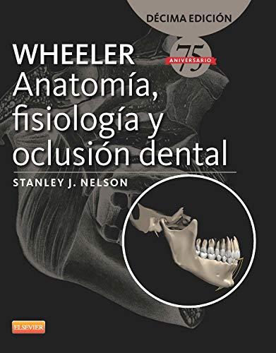 Argento Silber - Silber Wheeler Martello a Doppia Testa in Nylon