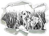 Neugieriger Hund im Feld Kunst B&W, Papier 3D-Wandsticker Format: 62x45 cm Wanddekoration 3D-Wandaufkleber Wandtattoo