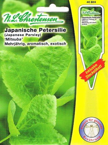Persil japonais 'Mitsuba' Asia salade pluriannuelle, aromatique, exotique (avec étiquette enfichable).