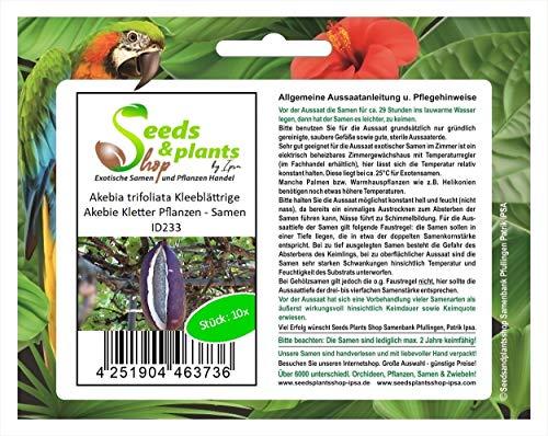 Stk - 10x Akebia trifoliata Kleeblättrige Akebie Kletter Pflanzen - Samen ID233 - Seeds Plants Shop Samenbank Pfullingen Patrik Ipsa