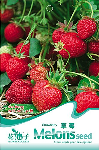 1 Original Pack, environ 30 graines / Pack, Bonsai Douce Red Strawberry Seed # B003