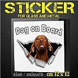 bracco ungherese cuccioli  Sticker Dog on Board for car - Adesivo Cane a Bordo per auto - VIZSLA Bracco ungherese