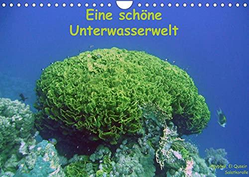 Eine schöne Unterwasserwelt (Wandkalender 2022 DIN A4 quer)
