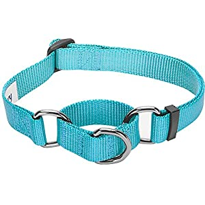 Blueberry Pet Essentials 21 Colors Safety Training Martingale Dog Collar, Turquoise, Medium, Heavy Duty Nylon Adjustable Collars for Dogs