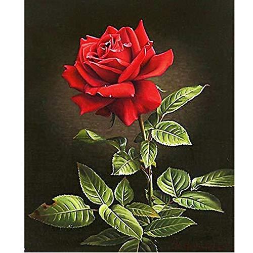 MXJSUA Kit de Pintura de Diamante 5D, Suministro de Lienzo para Manualidades con Taladro Completo para decoración de la Pared del hogar, Adultos y niños, Rosa roja 30x40cm