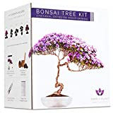 Bonsai Tree Kit I Grow Your own 5 Stunning Varieties of Bonsai Trees I Adult Craft Kits I Make Your own...