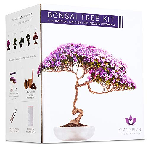 Bonsai Tree Kit I Grow Your own 5 Stunning Varieties of Bonsai Trees I Adult Craft Kits I Make Your own Gardening Gifts for Women Men and Children I Japanese Garden Gifts I propagators for Plants
