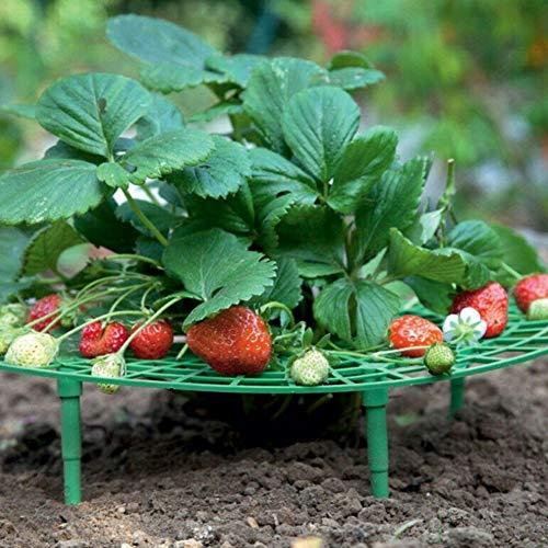 Fdit Support d'escalade pour Plantes, Cadre en Plastique, Fraise, Support pour Balcon, Outil de Jardinage pour Rack de légumes pour la Plantation de Balcon et la Plantation en Serre (11.8x11.8in)