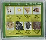 化石標本8種