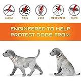 IMG-1 collare antipulci cane impermeabile design