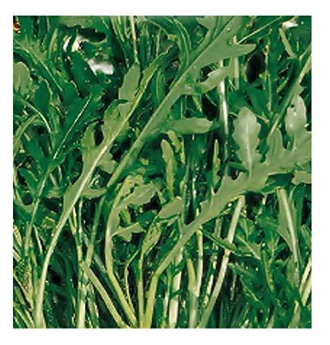 1500 Aprox. - Graines de roquette sauvages dentelées - Diplotaxis Muralis en paquet original Fabriqué en Italie - Wild Rocket
