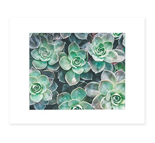 Abstract Green Floral Wall Art, Botanical Flower Decor, Set of 4 Photographic Prints - 5x7 or 8x10 (with or without matting), Wall of Succulents'