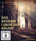 Das geheime Leben der Bäume (Film): nun als DVD, Stream oder Blu-Ray erhältlich