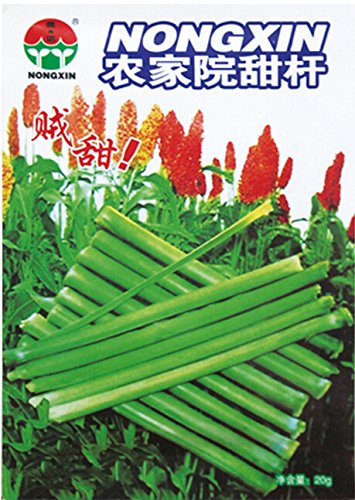 Rare Heirloom Très Sweet Seeds organiques Vert Sugarcane, 1 Original Paquet, Graines 20g / Pack, Juicy Fruit doux # NF608