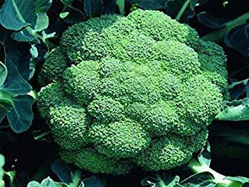 VISA STORE HCC 1 Lb Cabrese brocoli Graines | bourgeonnement MicroGreen