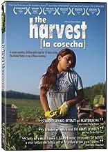 The Harvest/La Cosecha