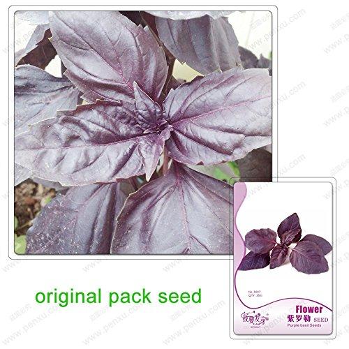 35 graines/Pack, plantes aromatiques noir basilic violet, graines de basilic violet foncé, jardin aromatique graine de plante en pot