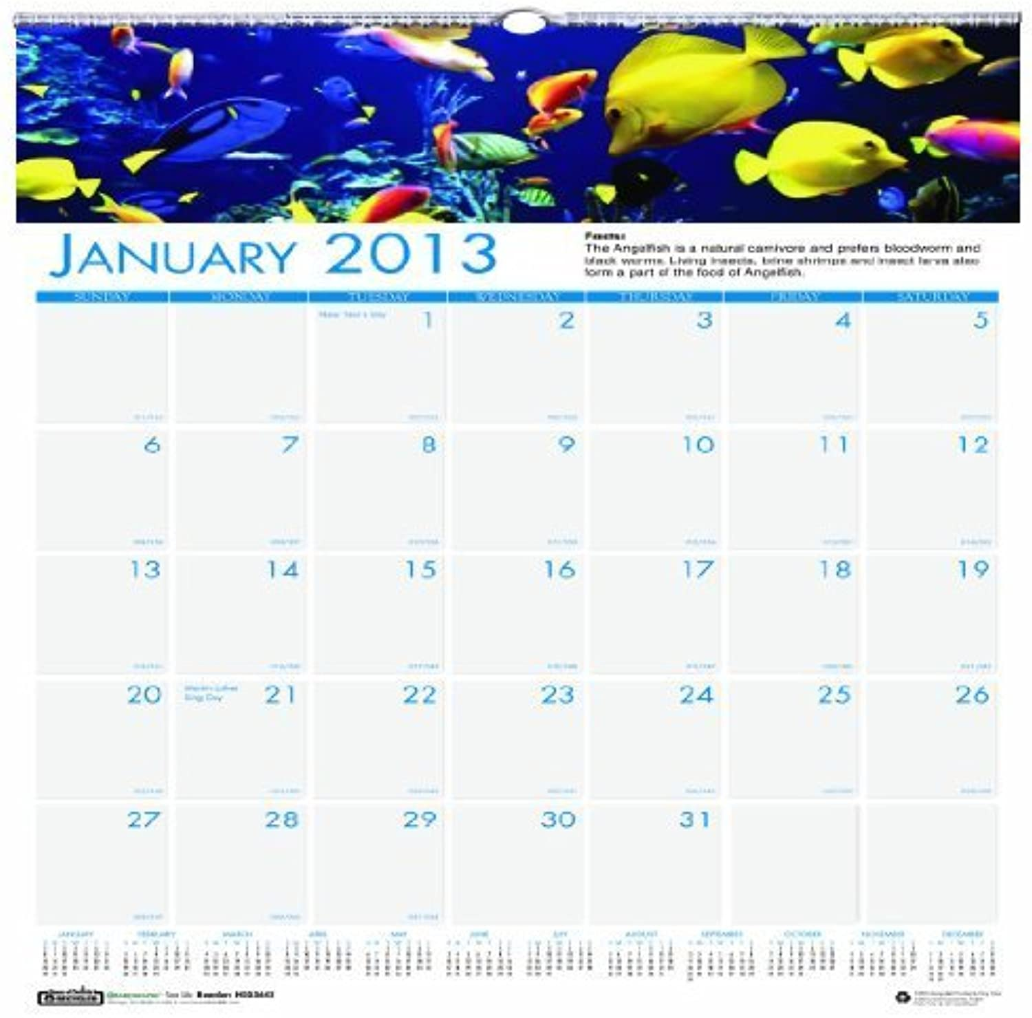 House of Doolittle Earthscapes Sea Life Wand recyceltem recyceltem recyceltem Kalender 12 Monate Januar 2013 bis Dezember 2013 30,5 x 30,5 cm, Farbe Fotos (hod3641) von House of Doolittle B01AVOECDA | Perfekte Verarbeitung
