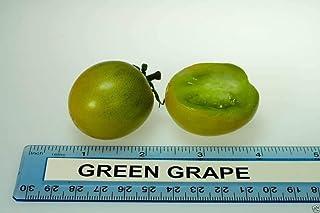 スワンズグリーン15:マルチカラーシード100%真パテノニシソウトリコスピダタ種子、日本栽培鉢植え種子、プロフェッショナルパック20個/袋15