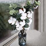 DWANCE 2PCS 45cm Getrocknete Baumwolle Natürliche Trockenblumen Baumwollzweig Deko Kunstpflanzen Eukalyptus Plastikpflanzen Deko für Tischdeko Vase Hochzeit Zimmer Winter Dekoration - 6