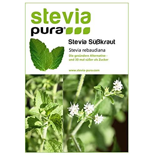 100 Stevia Samen   Stevia rebaudiana  ...