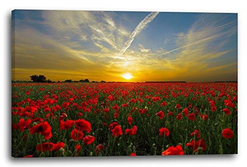 Impresión sobre lienzo (120x80cm): Flor de campo de la amapola Campo de...