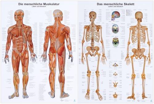 Doppelpack Anatomie-Lerntafeln Muskulatur und Skelett