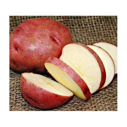 Organic Non GMO 1 lb SPRING SHIPPING NOW Seed Potatoes RED PONTIAC