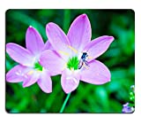 luxlady Caucho Natural Gaming Mousepads Beautiful 2 Rosa zephyranthes Flor y abeja en jardín, de imagen ID 26281253