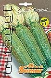 L'Orto di Semar Semi di zucchino Greyzini F1 varietà Ibride in Busta